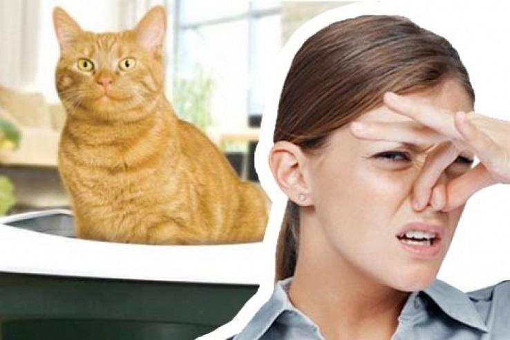 Запах мочи домашних животных в Казани